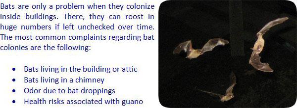 Colonizing Bat Information
